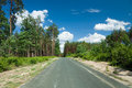 Free Road Through The Pine Forest Stock Photo - 23704480