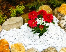 Free Red Flowers In A Rockery Royalty Free Stock Photos - 23701948