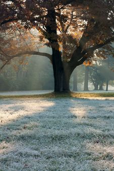 Misty Frosty Morning In The Park Royalty Free Stock Images