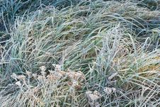 Free Green Grass In Frost Stock Photography - 23704942