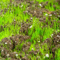 Free Closeup Of Young Fresh Green Grass Royalty Free Stock Image - 23711596