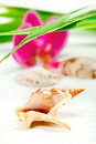 Free Seashell, Purple Orchid And Bamboo, On White Stock Photo - 23717220