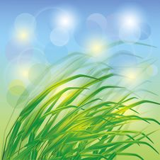 Spring Background With Fresh Green Grass Stock Photography