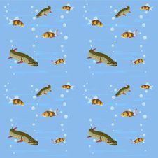 Freshwater Fish Stock Photo