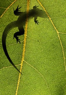 Free Silhouette Of A Lizard On A Leaf Back Lit Stock Image - 23721761