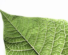 Free Green Leaf Stock Photography - 23723412