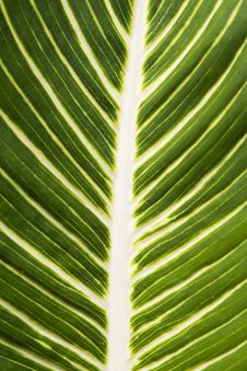 Free Leaf Green Stock Images - 23725304