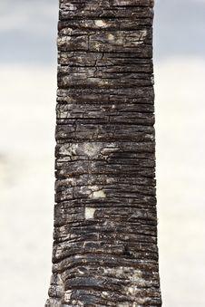 Free Tree Stock Image - 23729861