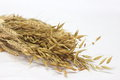Free Oat Rice Royalty Free Stock Photos - 23734758