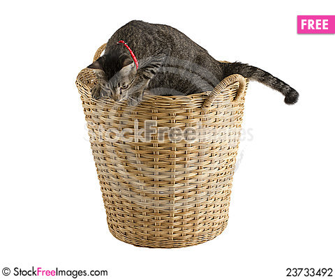 Free Cutely Cat In The Ratten Basket Stock Photography - 23733492