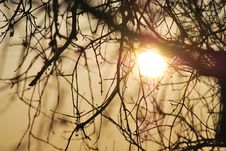 Free Sunset Behind Tree Branches Stock Photography - 23732762