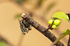 Breed Fly Stock Photo