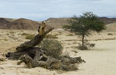 Free A Lonely Tree In Desert Of Negev, Israel Stock Photos - 23735393