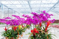Free Orchids Grow In Greenhouse Stock Images - 23736304