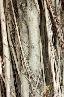 Free Tree Pattern Stock Photos - 23737913