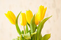 Free Yellow Tulip Royalty Free Stock Photo - 23742415