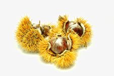 Free Chestnuts Stock Image - 23743491