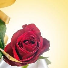 Free Beautiful Red Rose Royalty Free Stock Photography - 23744127