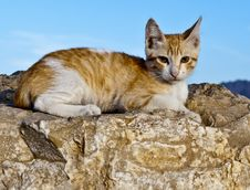 Free Lonely Red Cat Sitting On A Desert Stone Stock Photos - 23744313