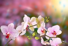 Free Beautiful Spring Background Royalty Free Stock Photos - 23747178