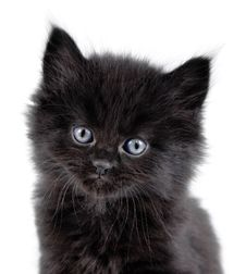 Free Black Little Kitten Sitting Down Royalty Free Stock Image - 23747336