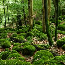 Free Mossy Rocks In The Forest Stock Image - 23747401