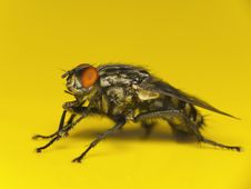 Free House Fly Macro Stock Photography - 23747812