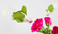 Free Green Energy With A Rose. Royalty Free Stock Image - 23753116