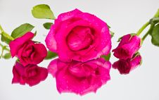 Free Three Of Red Roses Royalty Free Stock Photo - 23752725