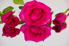 Free Three Of Red Roses Royalty Free Stock Photo - 23752835