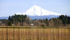 Mt. Hood In Winter, Oregon State. Royalty Free Stock Photo