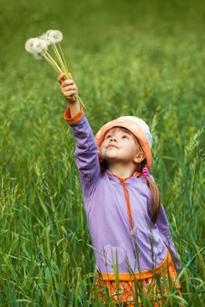 Free Little Girl With Puffy Dandelions In Your Hand Royalty Free Stock Images - 23753869