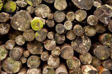Free Log Pile Royalty Free Stock Image - 23754566