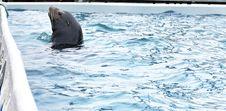 Free Seal Stock Photos - 23760443