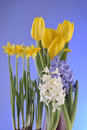 Free Spring Flowers On Blue Background Royalty Free Stock Images - 23776839