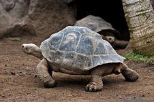 Free Tortoises Stock Photo - 23774520