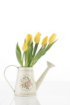 Free Spring Tulips Isolated On White Stock Image - 23776821