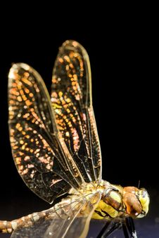 Free Dragonfly Stock Image - 23781131
