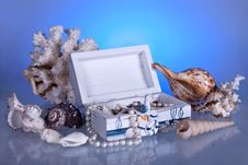 Box With Seashells, Coral And Pearls Stock Image