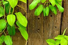 Leaves And Wall