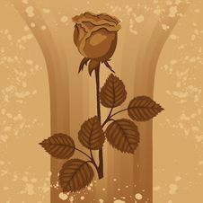 Free Vintage Background With Rose Silhouette Royalty Free Stock Photo - 23792395