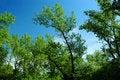 Free Tree Opposite Blue Sky Royalty Free Stock Photo - 2384545