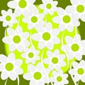 Free Daisy Floral Royalty Free Stock Images - 2387039