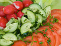 Free Fresh Vegetables Stock Images - 2388944