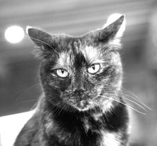 Free Cat Stock Images - 2380004