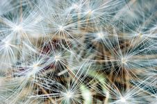 Free Dandelion Clock Royalty Free Stock Photos - 2380638