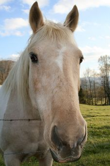 Free Horse In The Cove Royalty Free Stock Photos - 2381178