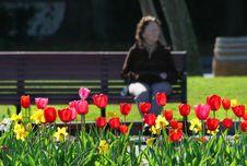 Free Flowery. Stock Image - 2383511