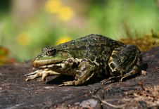 Free Green Hopper Stock Images - 2383684
