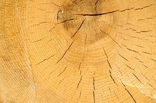 Free Tree Rings Stock Photo - 2384350